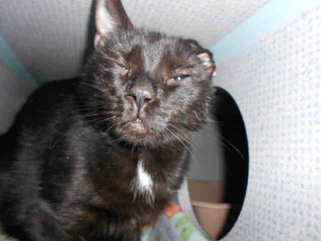 Elsa Pittsburgh Pa Petharbor Com Animal Shelter Adopt A Pet Dogs Cats Puppies Kittens Humane Society Spca L Humane Society Animals Animal Shelter