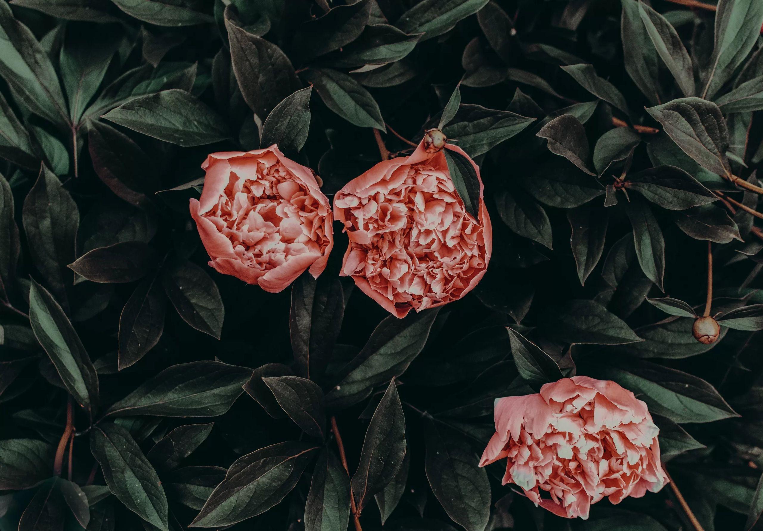 Пин от пользователя Тупа скелетик на доске flowers Вид