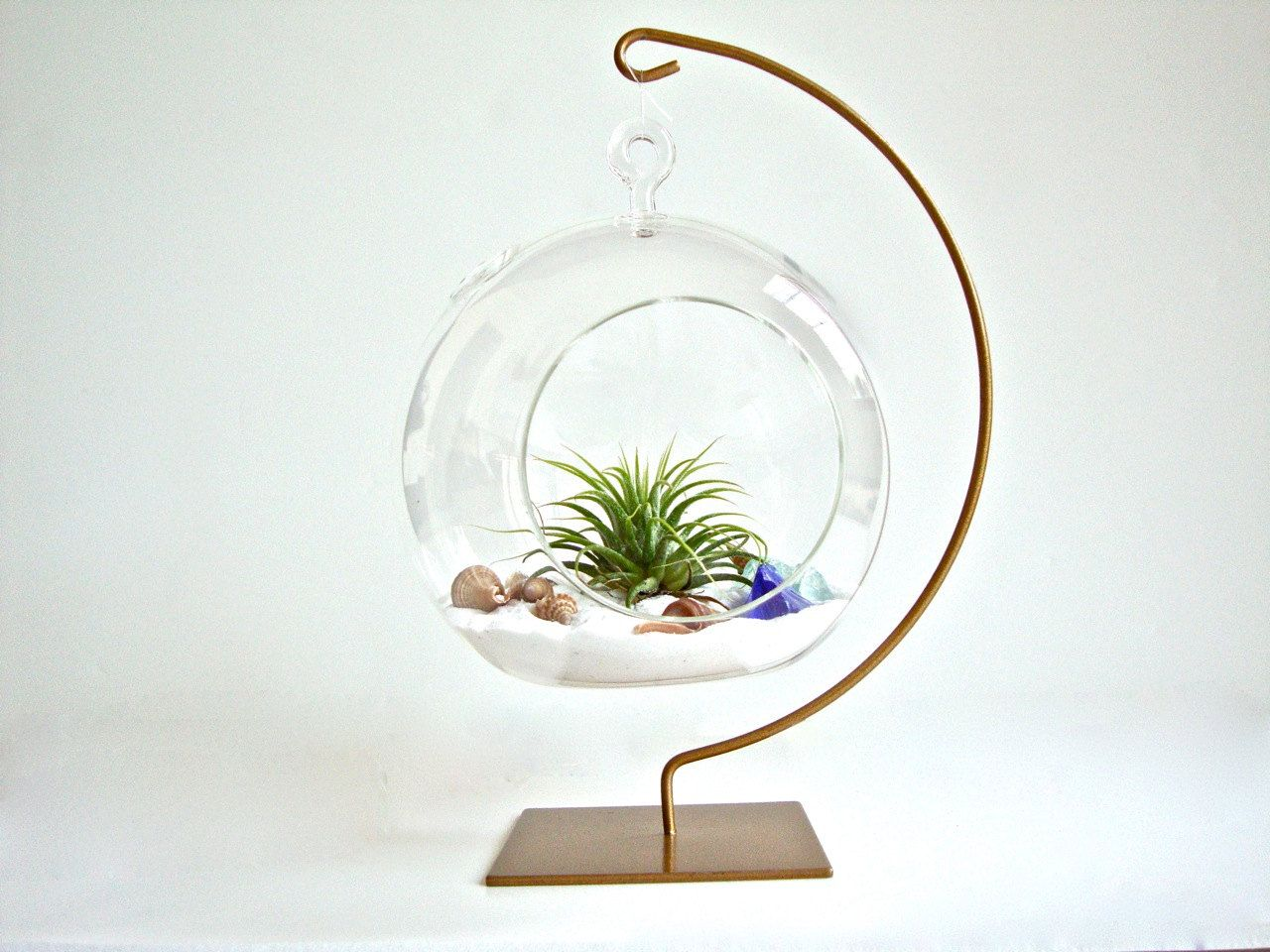 Large Round Glass Air Plant Succulent Moss & Cactus by DrabDesign | My  little urban garden :) | Pinterest | Round glass, Air plants and Terraria