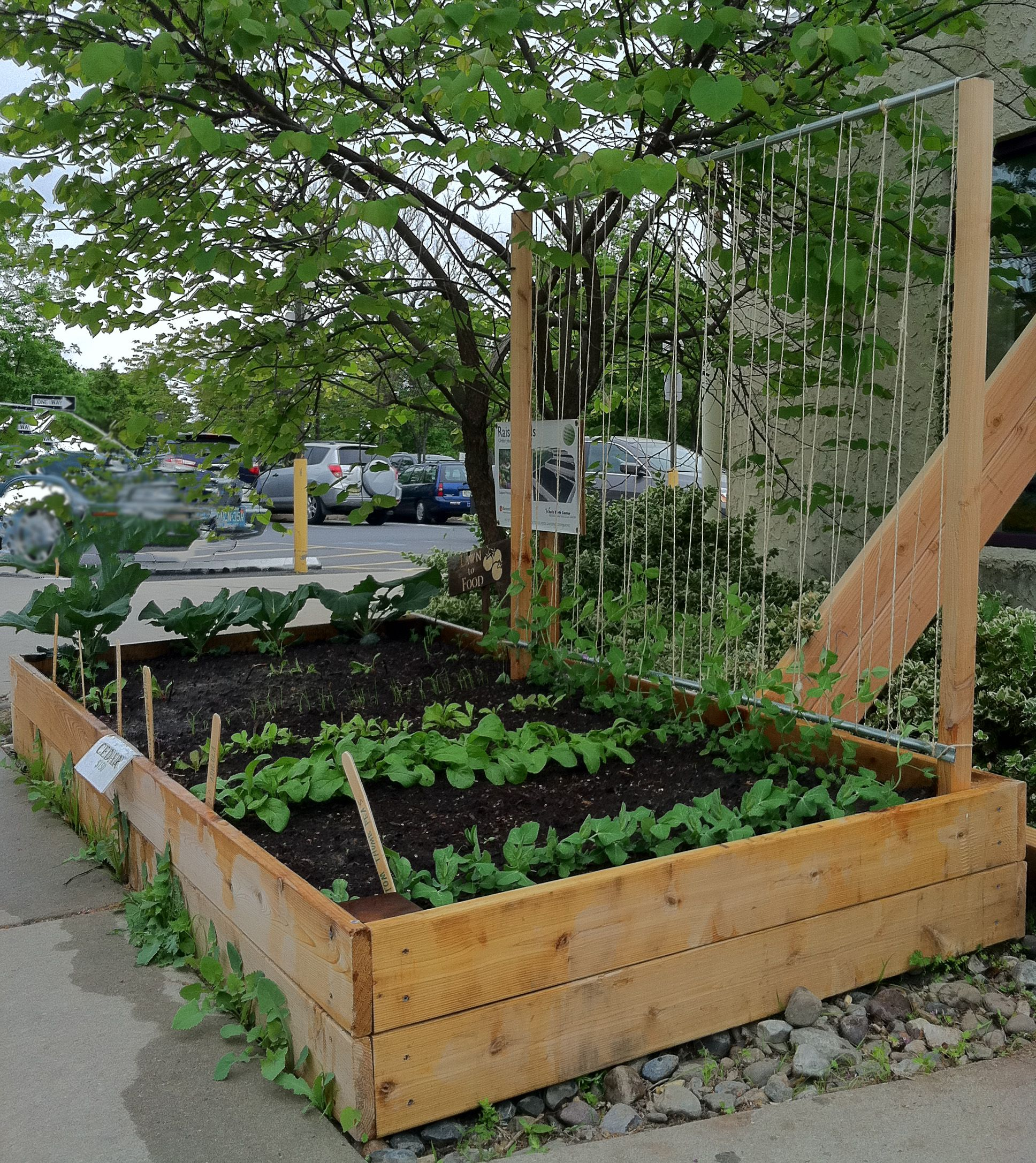 string bean trellis designs