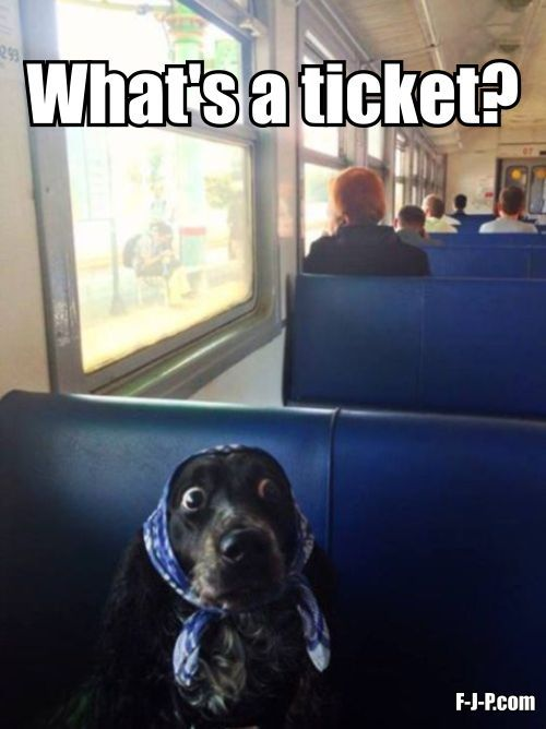 Dog Train Ticket Meme Funny Animals Funny Dogs Funny Dog Pictures