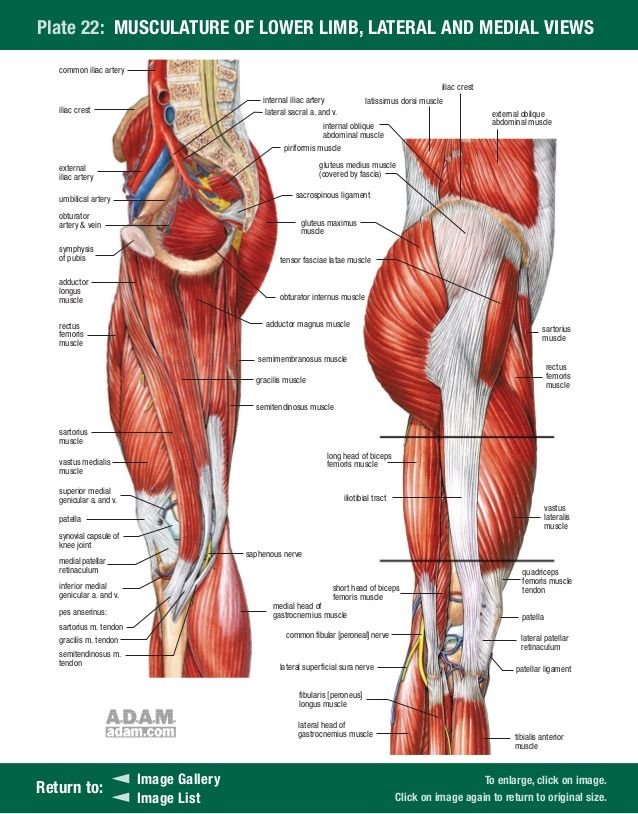Stedman Anatomical Images 25 638g 638814 People Pinterest