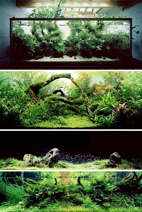Aquariums by artist takashi amano who applies principles for Garden aquarium design