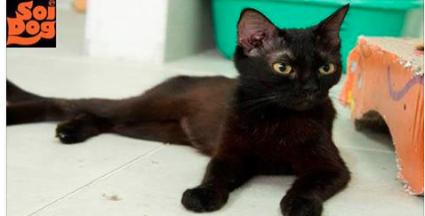Please join our Care for Cats Club to help so many cats in