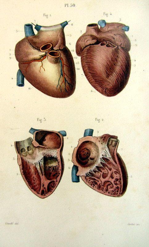 Antique HEART print 1852 human anatomy by LyraNebulaPrints, $27.50 ...