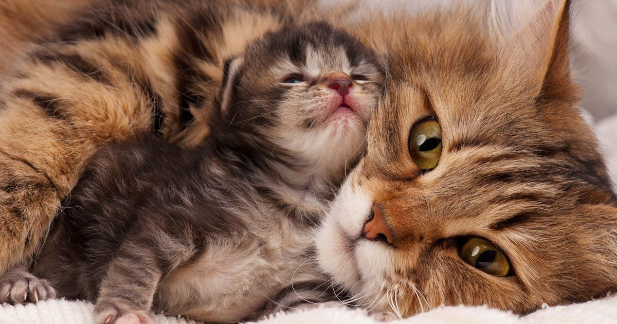 5 Reasons A Mother Cat Might Abandon Or Reject Her Young Kittens