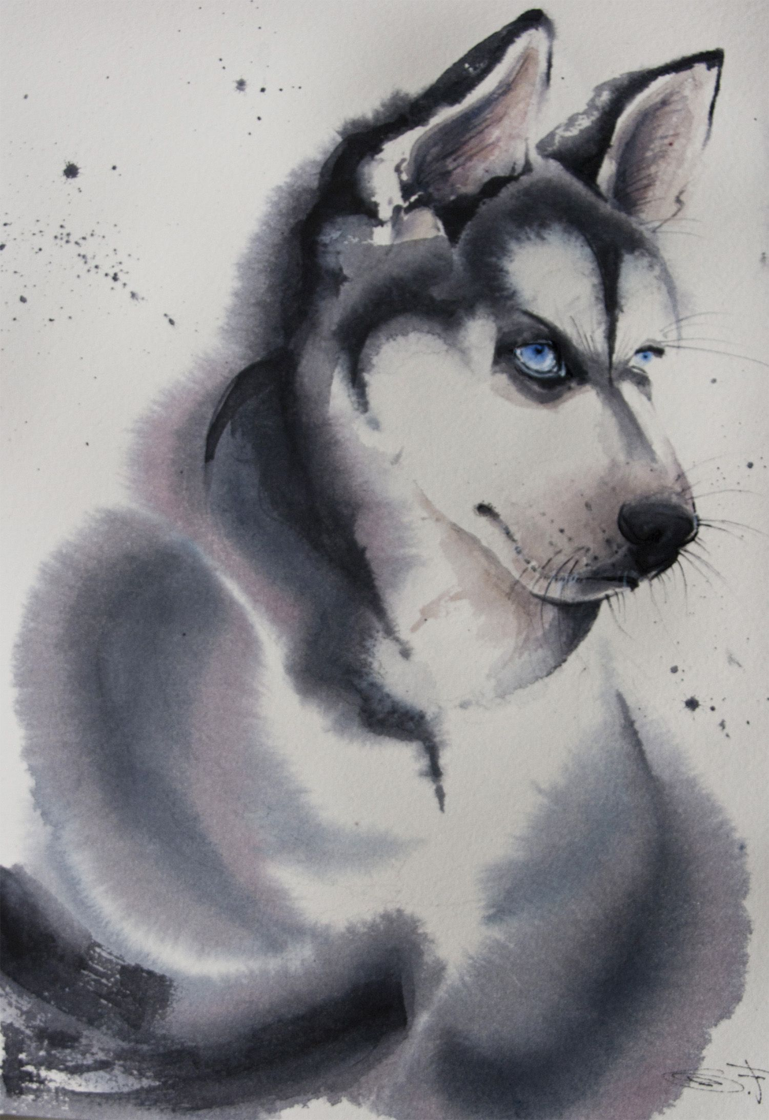 Husky The Snow Dog 5 30 21 Cm Watercolor On Paper Olga Flerova O