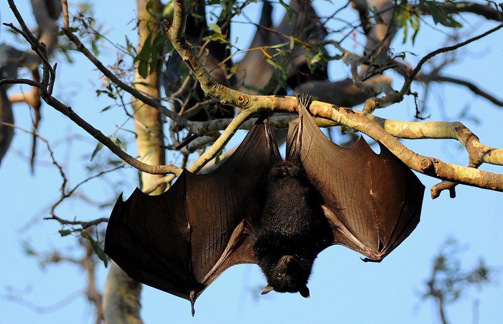 Park Art My WordPress Blog_What Do Bats Sound Like When Flying