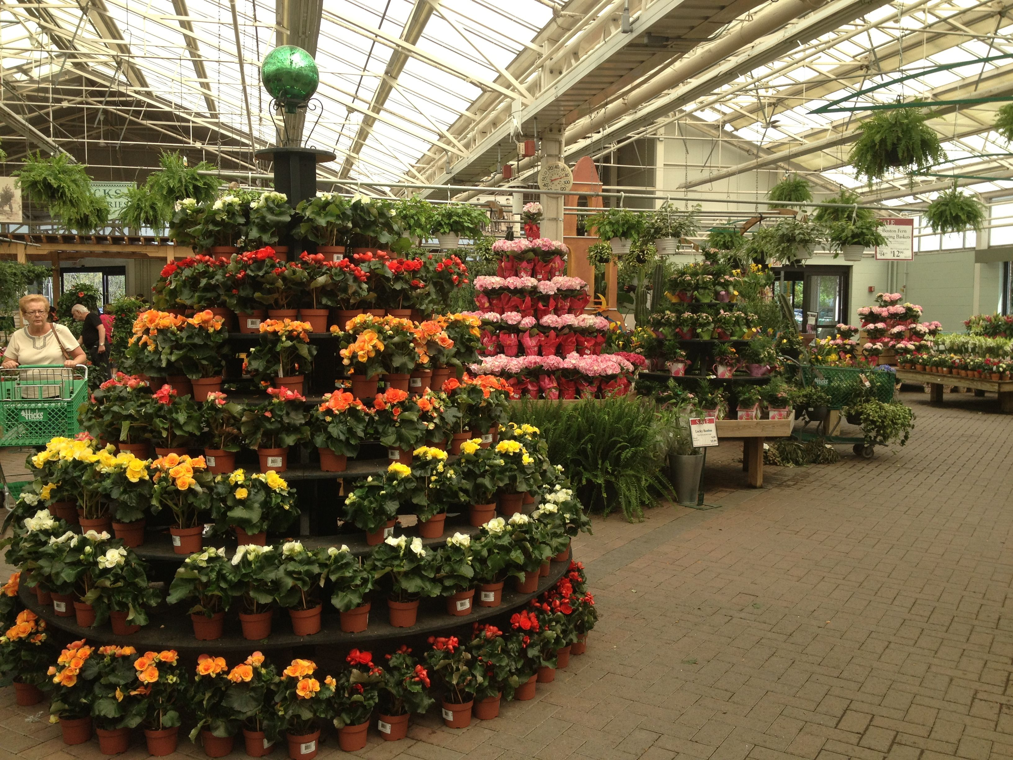 The Maiin Greenhouse at Hicks Nurseries. Garden center