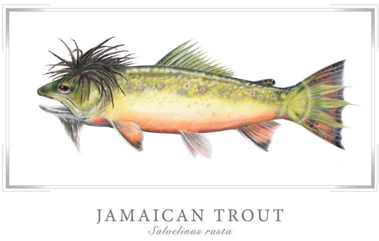 the totally mellow Jamaican trout