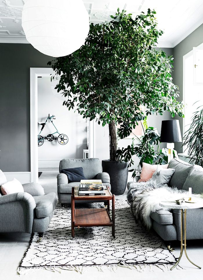 Una casa con un árbol dentro! 1