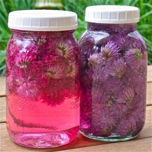 Chive Flower Vinegar Chive Flower Edible Flowers Recipes Chive Blossom