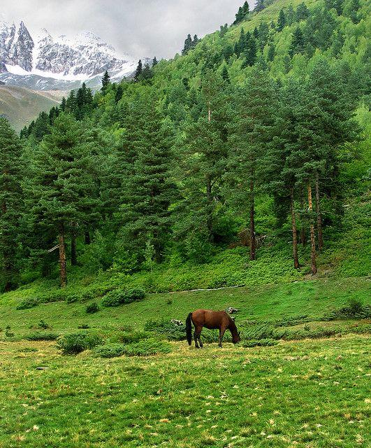 Mountain meadow grazing