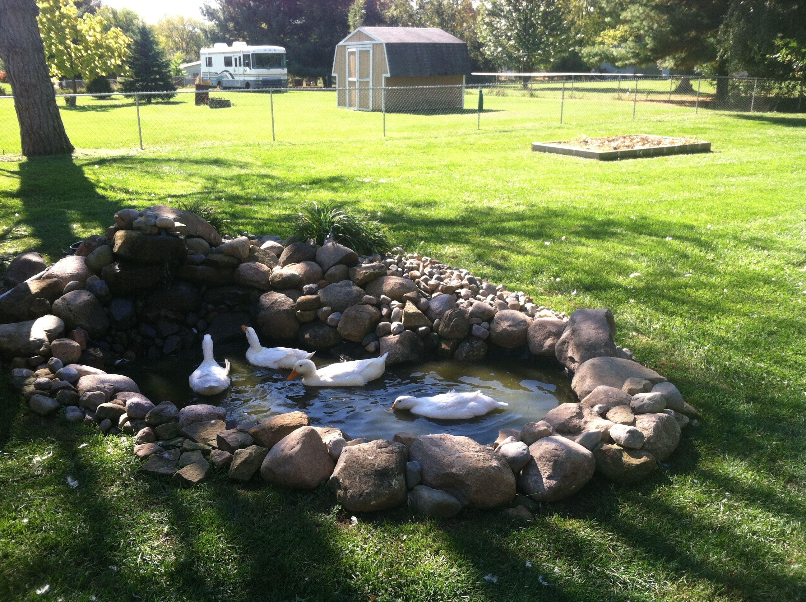 Small Duck pond Fall 2013 | Duck pond, Ponds backyard ...