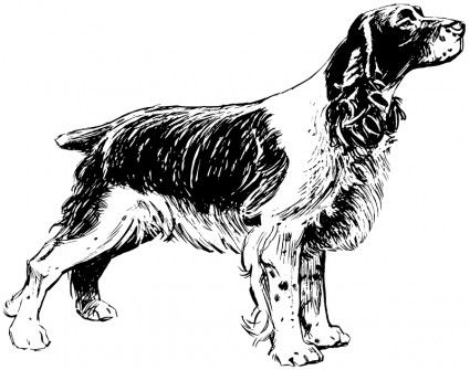 childrens coloring pages springer spaniel | cocker spaniel template | Free vector >> Vector clip art ...