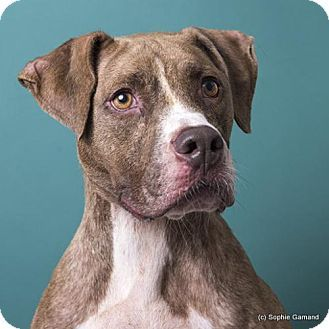 Pin on Need adopted & love