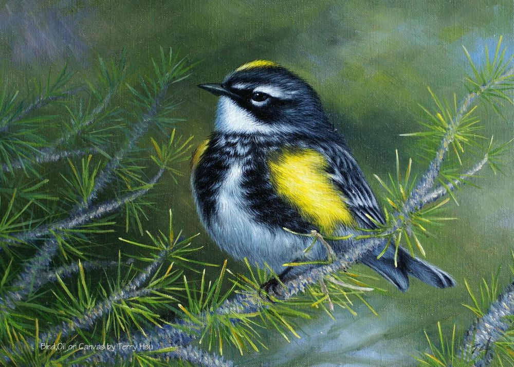 Original oil painting by Terry X.Bird,Warbler,Hyper-realistic style,stretched #Realism