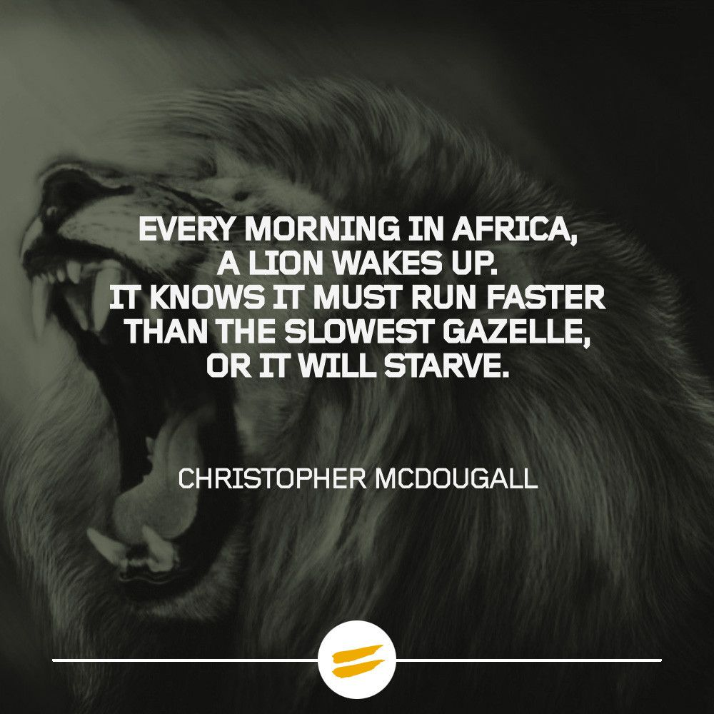 Every Morning In Africa A Lion Wakes Up Workin Out Pinterest