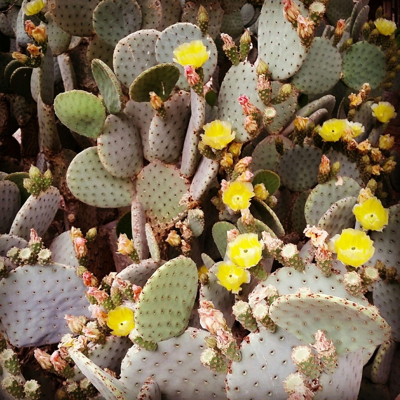 Pin Auf Cactus