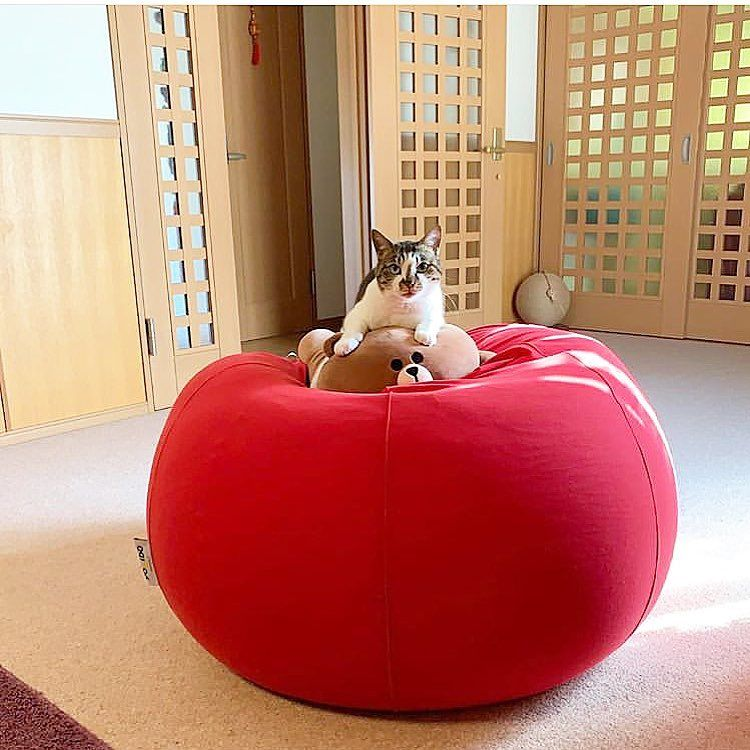 New The 10 Best Home Decor With Pictures Life With Yogibos Yogiboのある生活 Yogibo Pod Red Photo Repos Best Leather Sofa Stylish Decor Leather Sofa