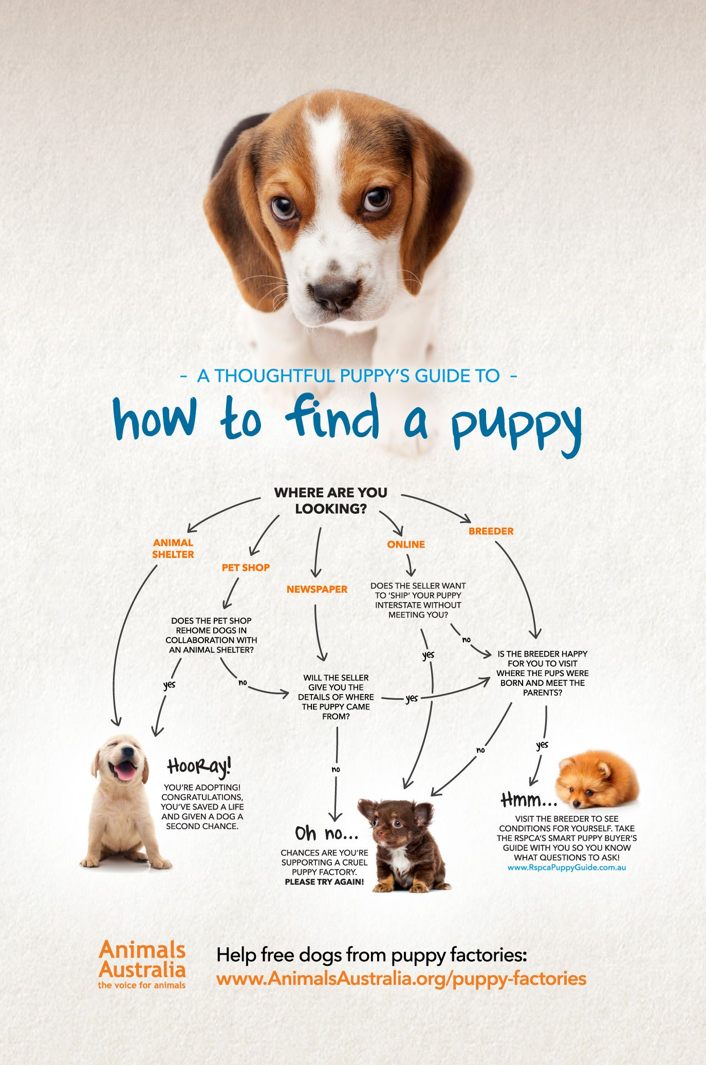 You And Your Dog Tips For A Great Relationship Puppies