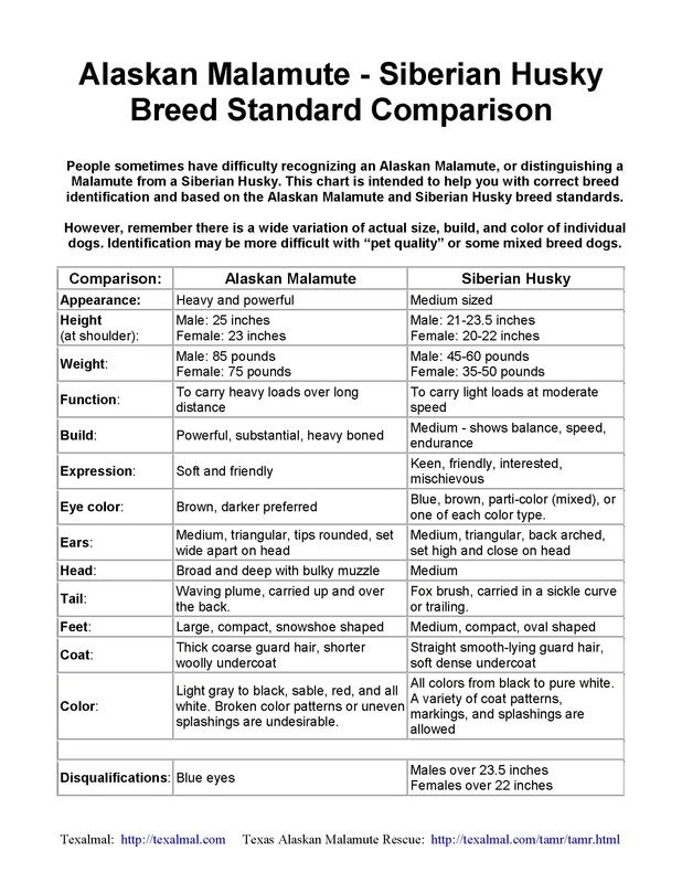 Alaskan Malamute Vs Siberian Husky Breed Standard Alaskan