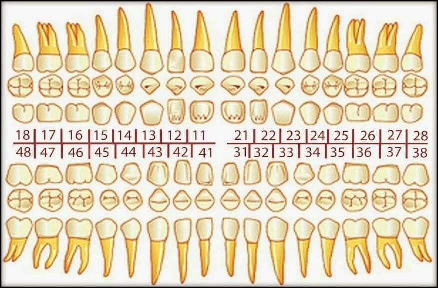 Pin von Debby Piet auf Dentist | Pinterest