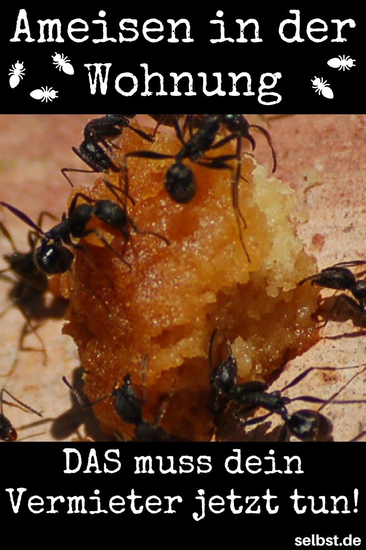 Ameisen In Der Wohnung Tuin