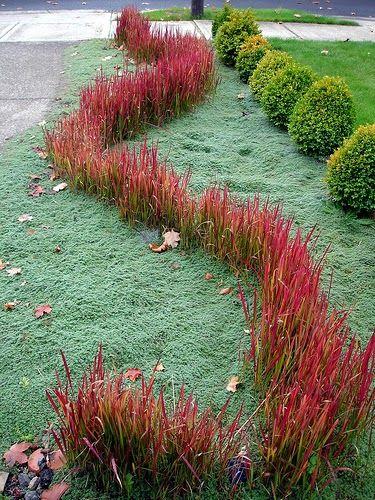 The garden of eaden japanese blood grass imperata for Red ornamental grass plants