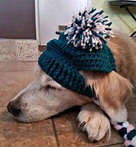 Doggie Beanie Dog Hat Crochet Dog Hat Dog Pom Pom Hat Dog Clothes Winter Hat Crochet Beanie Pet Clothes By Cc Crochet Dog Hat Diy Dog Sweater Crochet Dog