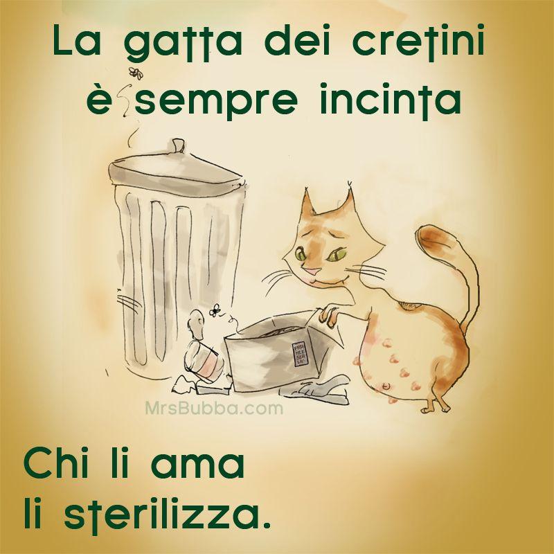 La-gatta-sterilizza
