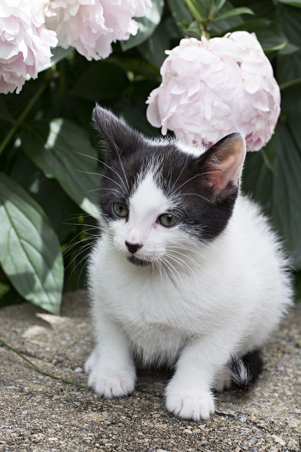 Friday Favorites Kitten Update