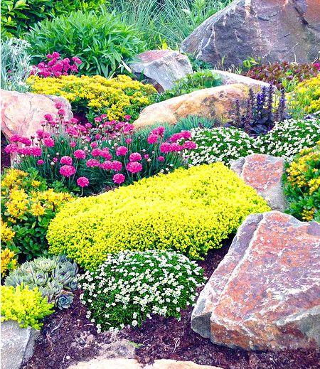"Photo of Rock garden mix ""Happy Flowers"", 4 planter"