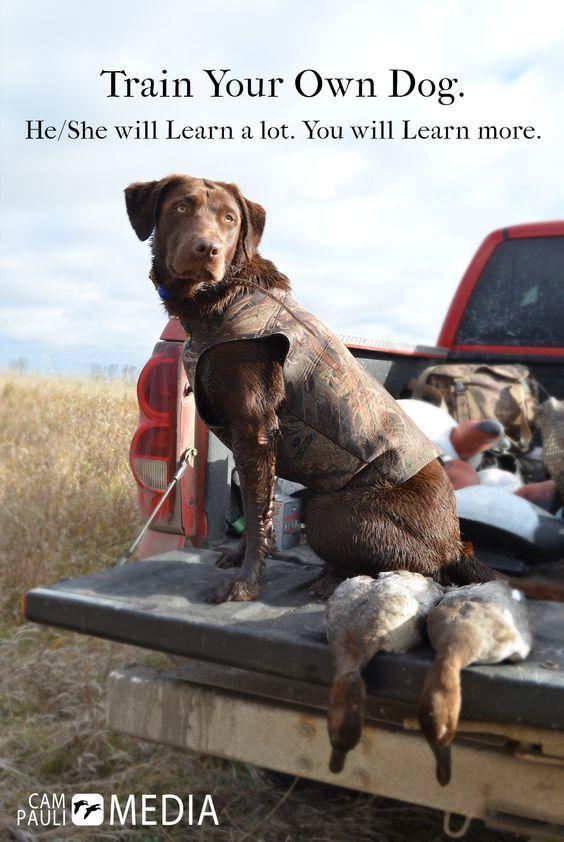 Amen Porter And Pistol Annie Bird Dog Training Dog Training