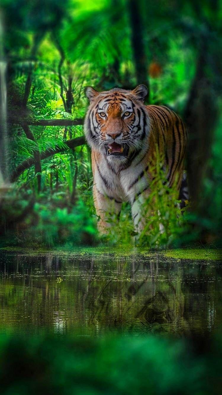 MuchaTseBle (с изображениями) | Большие кошки, Животные ...