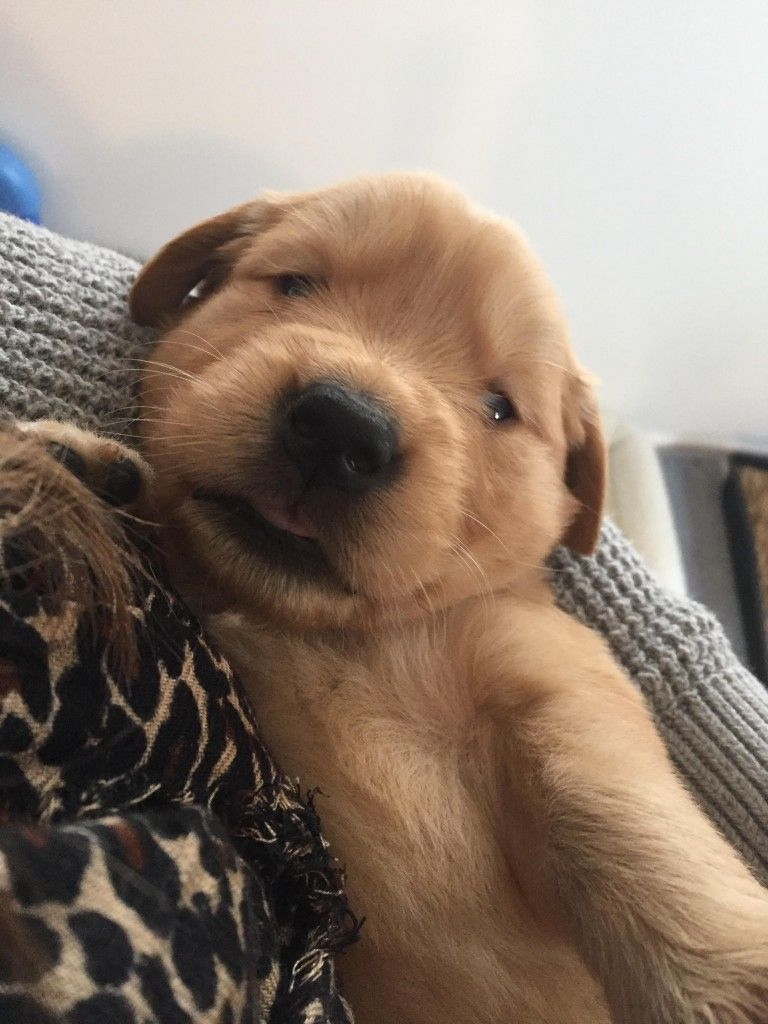 Warrior Canine Connection Puppy Petting Has Begun Puppies Pets
