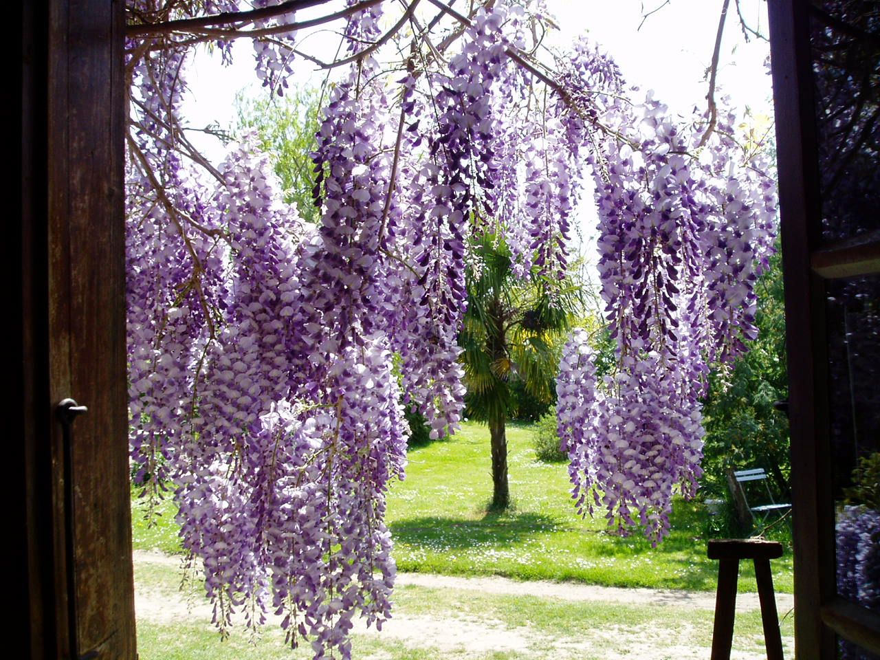 Can't you just smell the wisteria at Le Vieux Presbytere, Noulens, France. www.escapetogascony.com