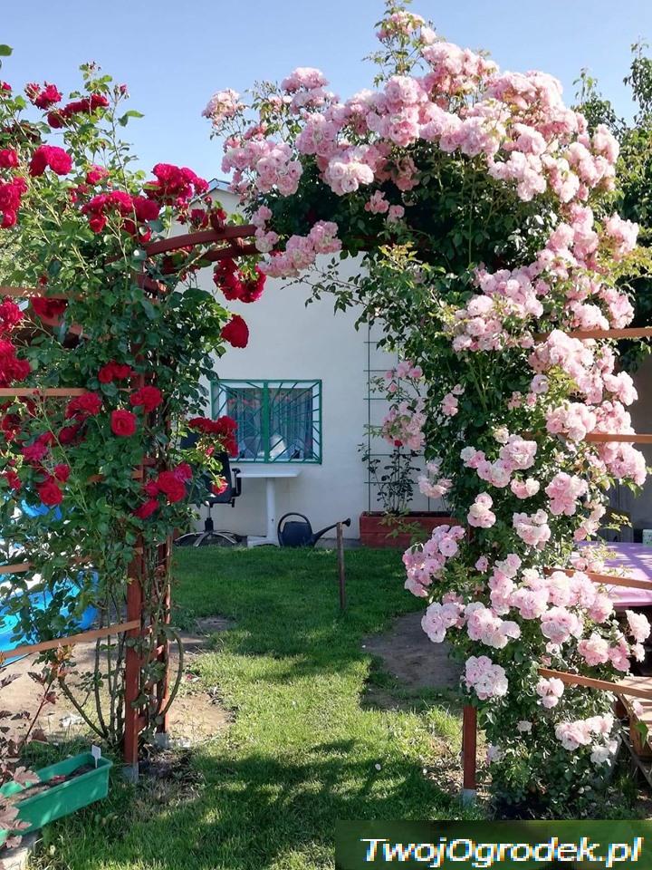 Roze Wejsciem Do Innego Swiata Garden Flowers Pergola