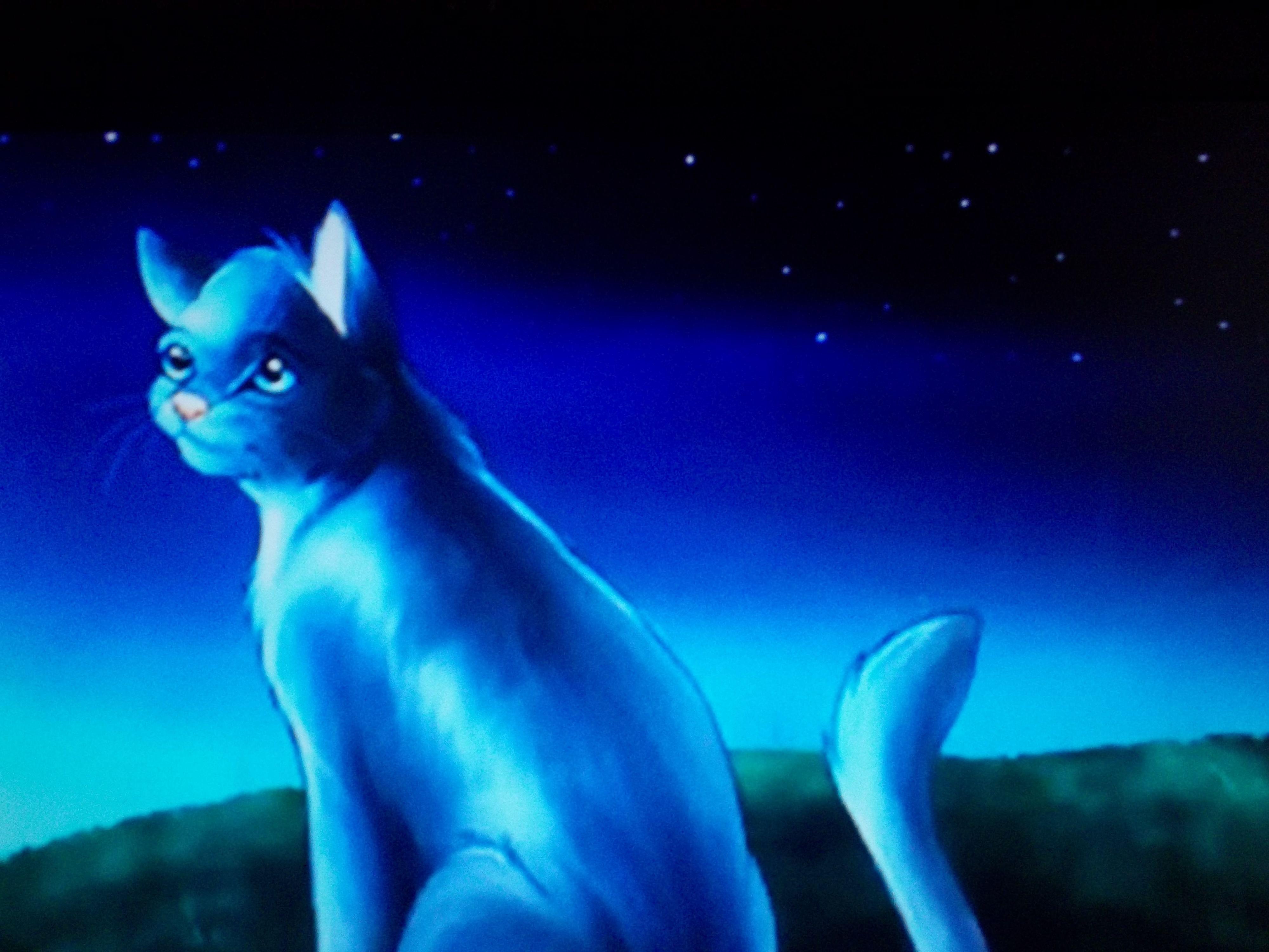Warrior Cat, Bluestar, Leader Of Thunderclan, Before Firestar My Favorite  Warrior!