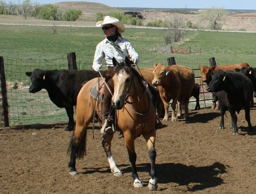 Pin By Kat Gabby On Misc Pinterest Horses And Ranch