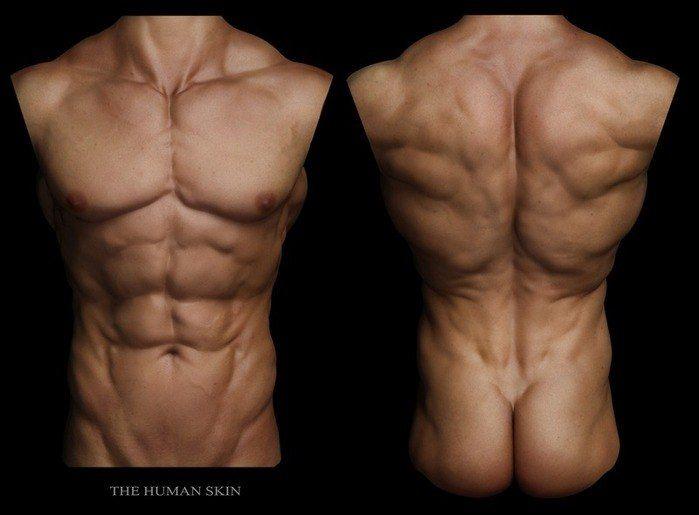 male torso back | ref: anatomy | Pinterest | Male torso, Anatomy and ...
