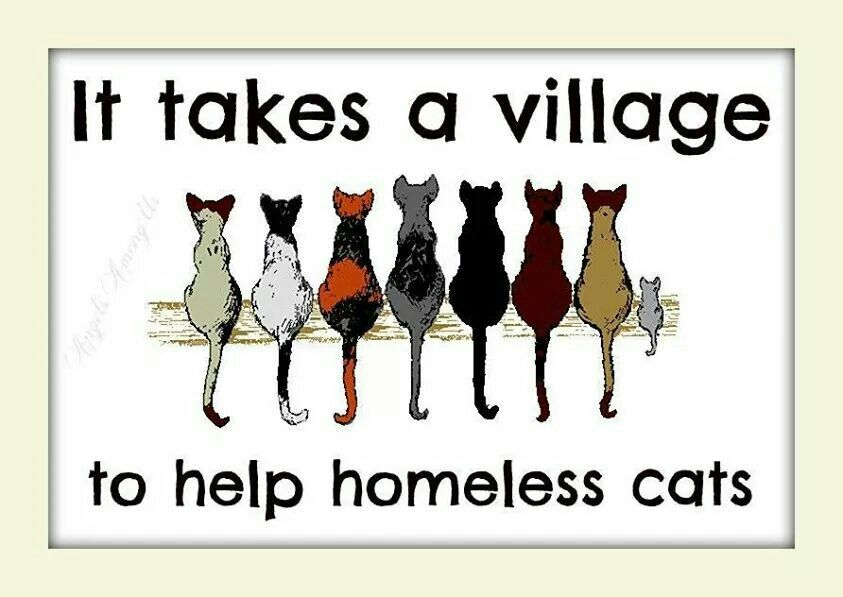Homeless Cats Whimsical Cats Cat Clipart Cat Artwork