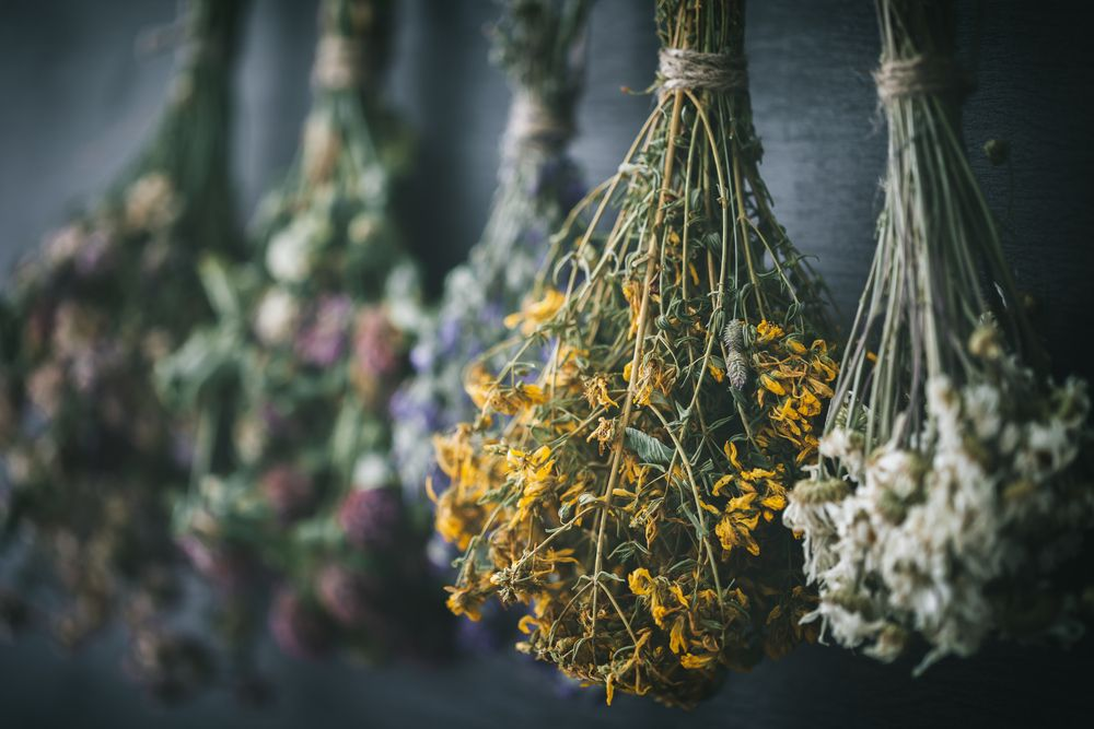 how to grow chamomile in india