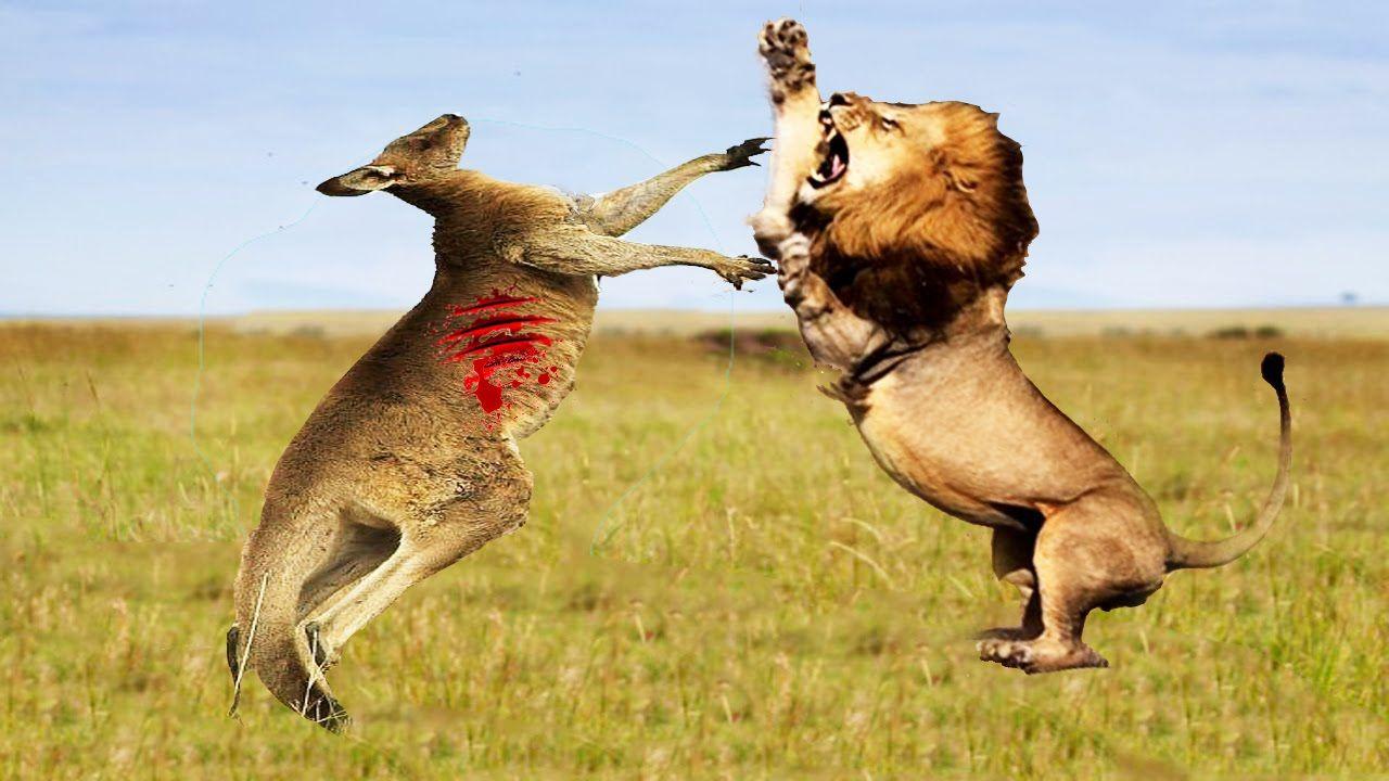 LION VS TIGER, GORILLA, HYENA, CROCODILE, ELEPHANT | LION ...