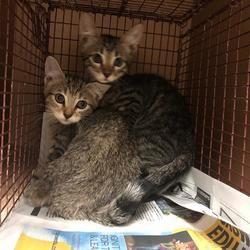 Austin Animal Center In Austin Texas Saving Cat Cat Adoption Pets Movie