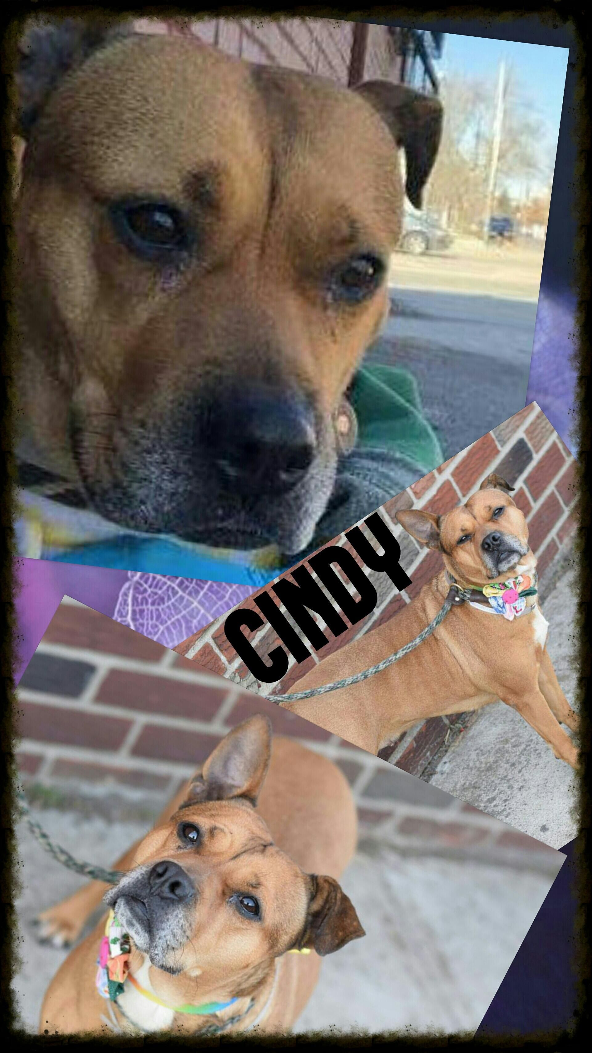 CINDY A1030991 Shelter dogs, Cat help, Dog cat