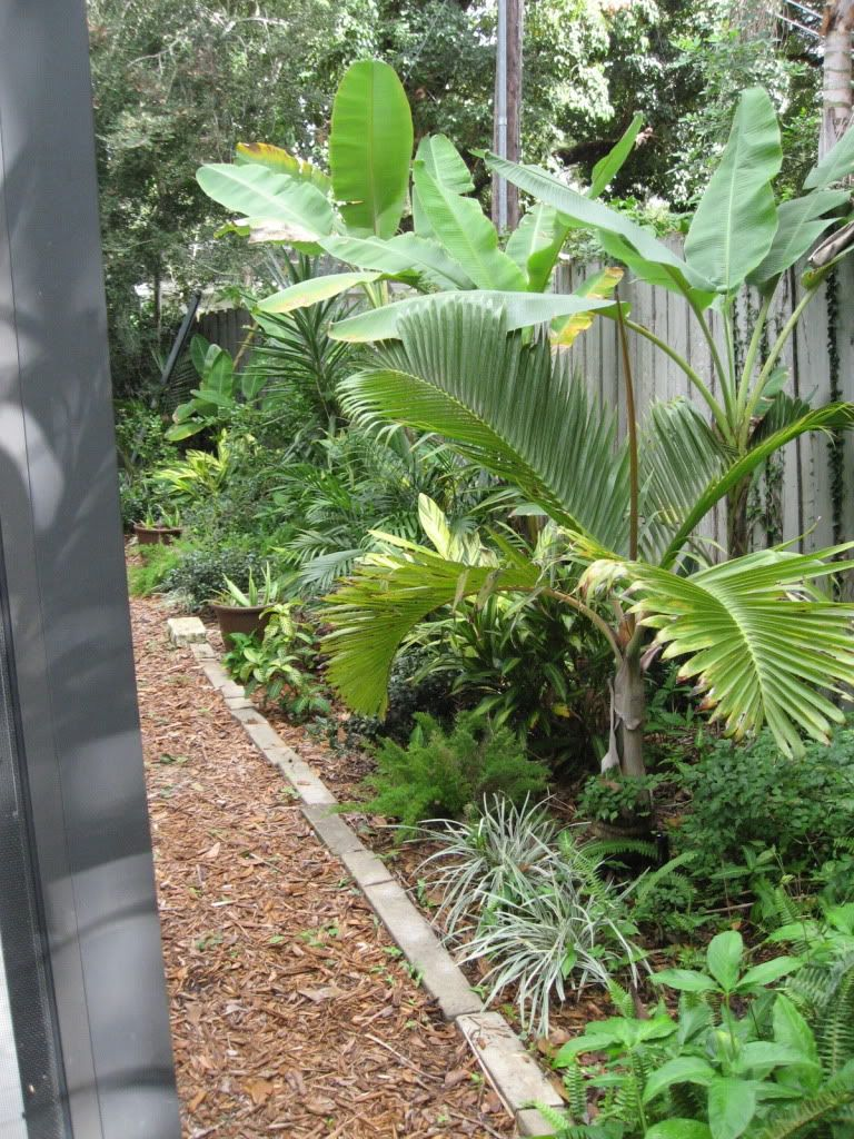 Good Plants For Florida Pool Cage Google Search Landscaping Around Pool Pool Landscaping Tropical Landscaping