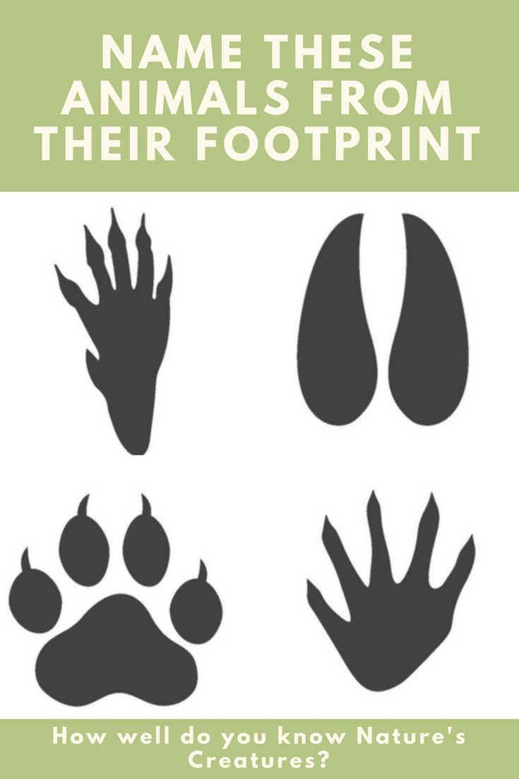 97 Of People Can T Name These Animals From Their Footprint Can