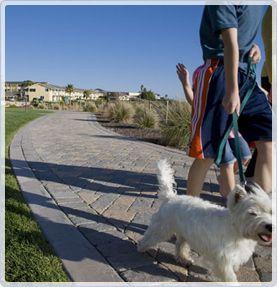 The Dolphin Bay Resort Spa Pismo Beach Dog Friendly Hotel