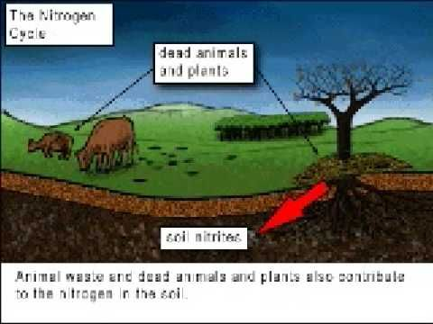 ▶ The Nitrogen Cycle - YouTube